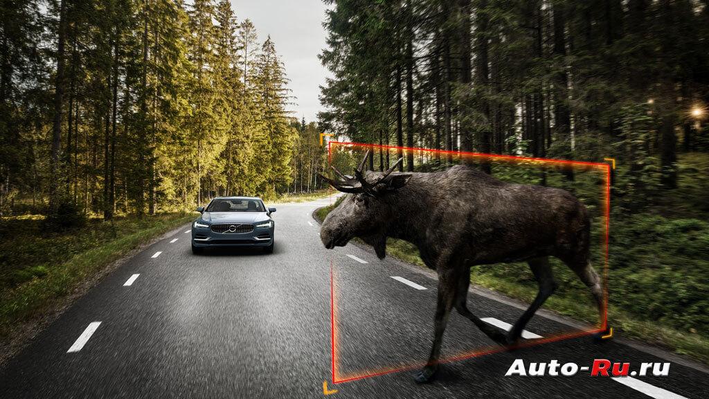 Система обнаруживает крупное животное и подает сигнал